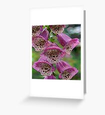 FloralFantasia 25 Greeting Card