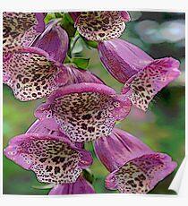 FloralFantasia 25 Poster