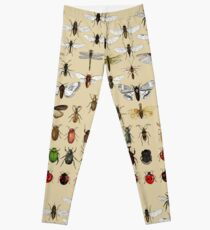 Entomology Insect studies collection  Leggings