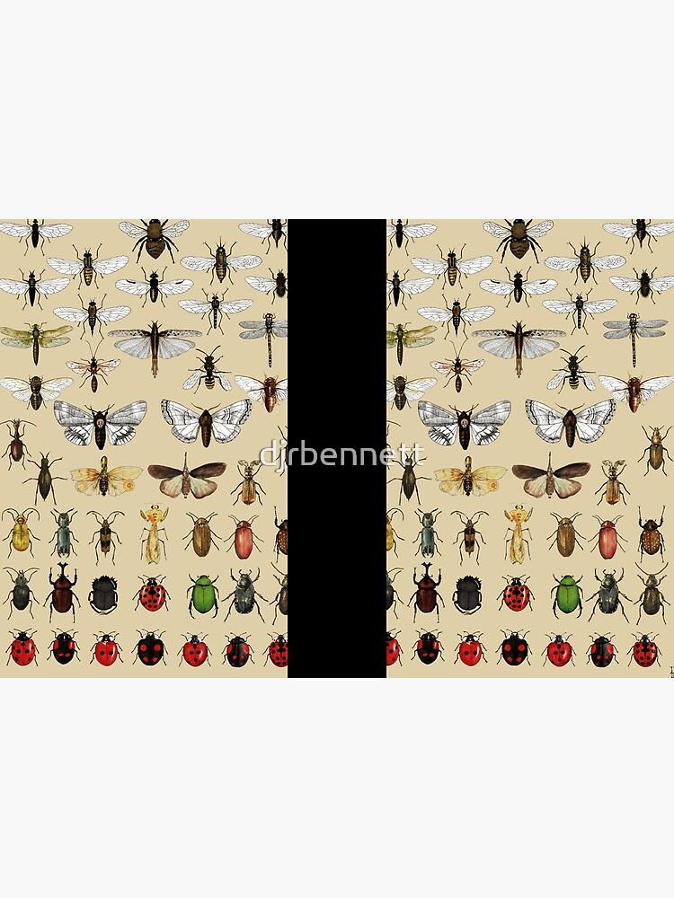 Colección de estudios de entomología de insectos de djrbennett