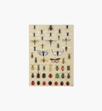 Entomology Insect studies collection  Art Board