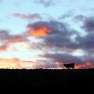 Cow With Sunrise by Asoka