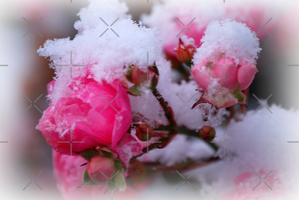 Snow flowers by nitelite
