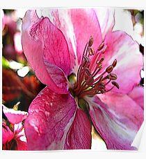 FloralFantasia 30 Poster