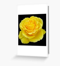 Beautiful Yellow Rose Flower on Black Background Greeting Card