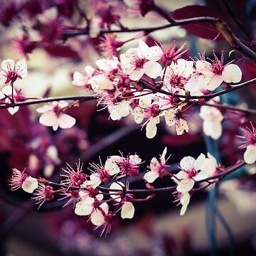 garden of cherry blossoms by Unwritten
