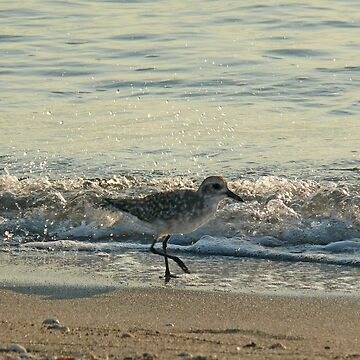 Sandpiper Splash by probono