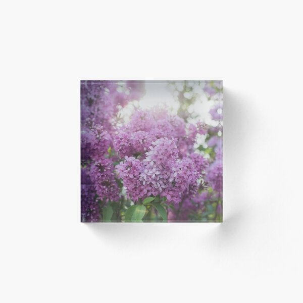 Dreamy Spring Lilac Acrylic Block