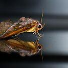 Moth on a mirror by AnnaKT