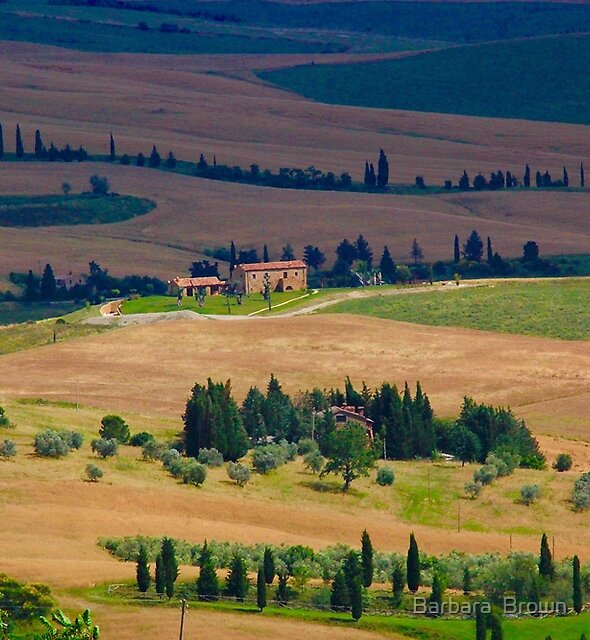 Tuscan Landscape by Barbara  Brown