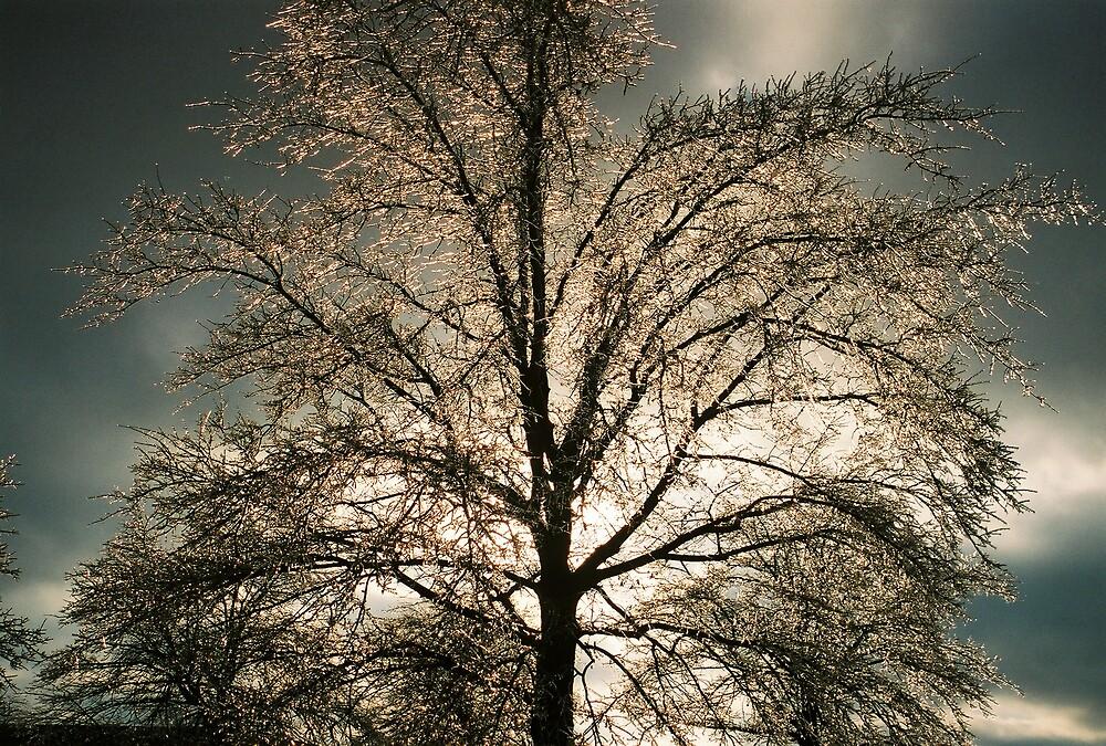 Ice Tree by glennp731