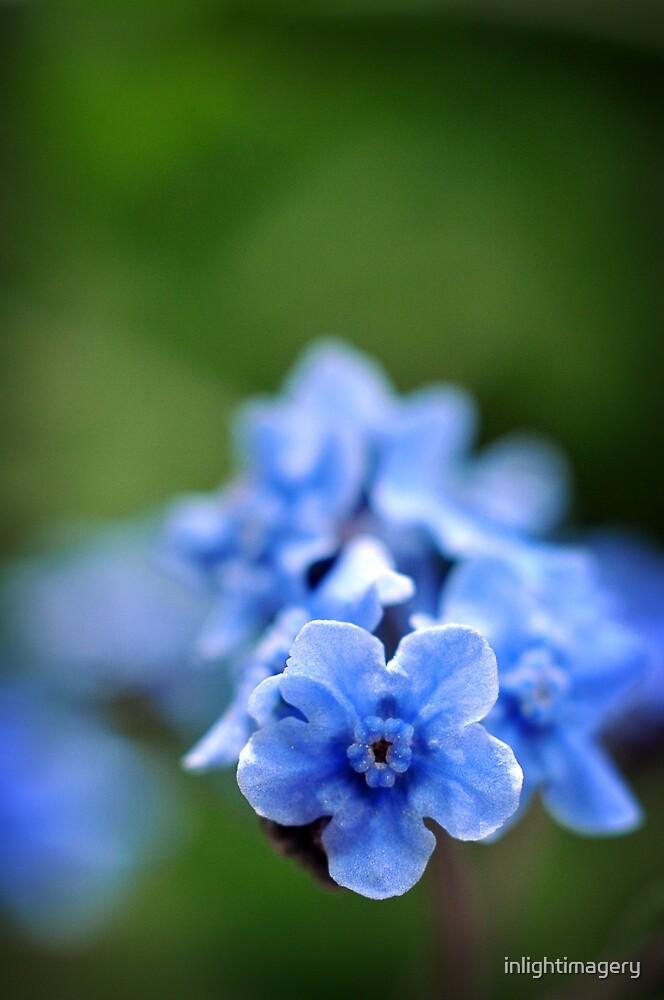 I Spy Something Blue by inlightimagery