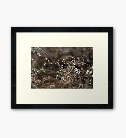 Pure Morning III Framed Print