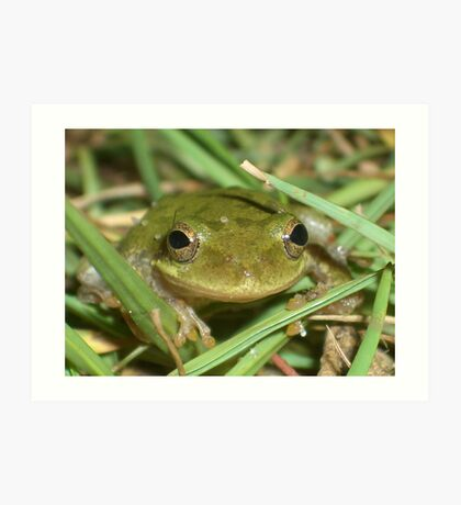 Frog Smiley Pictures, Images & Photos | Photobucket