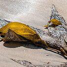Hintergrundbeleuchtete Algen von Celeste Mookherjee