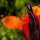 Blazing orange by Celeste Mookherjee