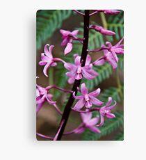 Hyacinth Orchid Canvas Print