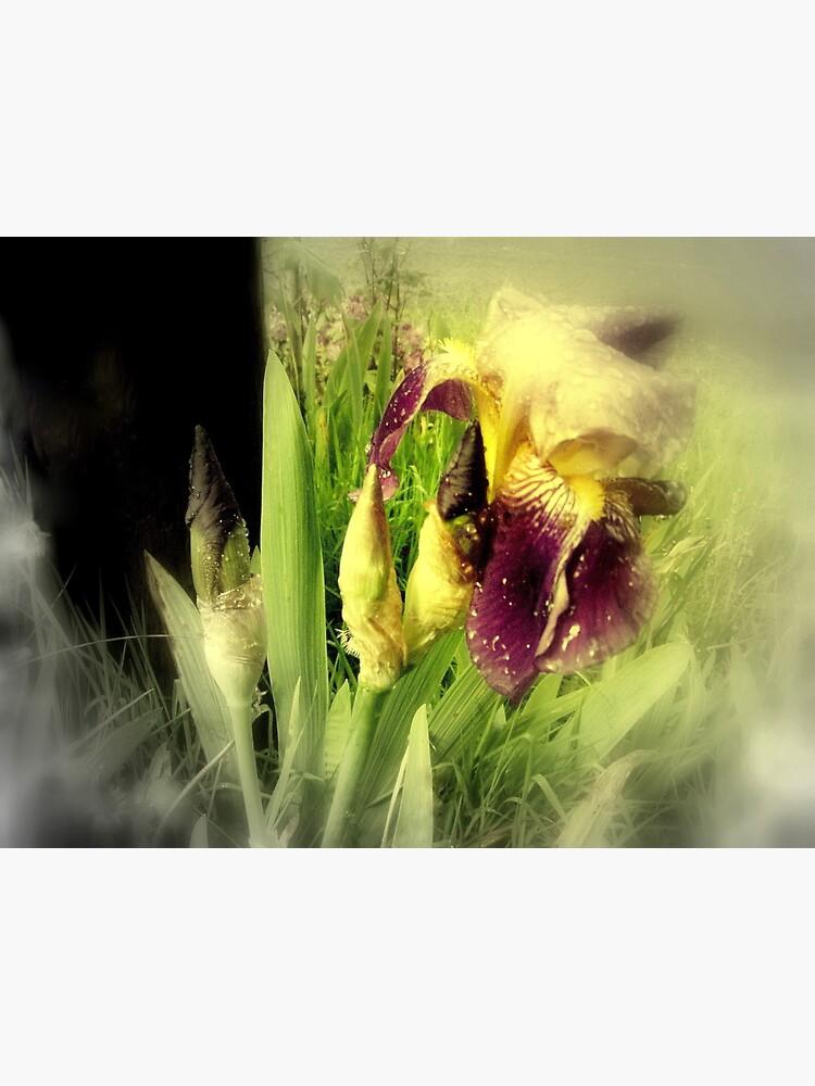 Raindrops on Purple Irises #5 by DlmtleArt
