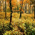 THE YELLOW FOREST by leonie7