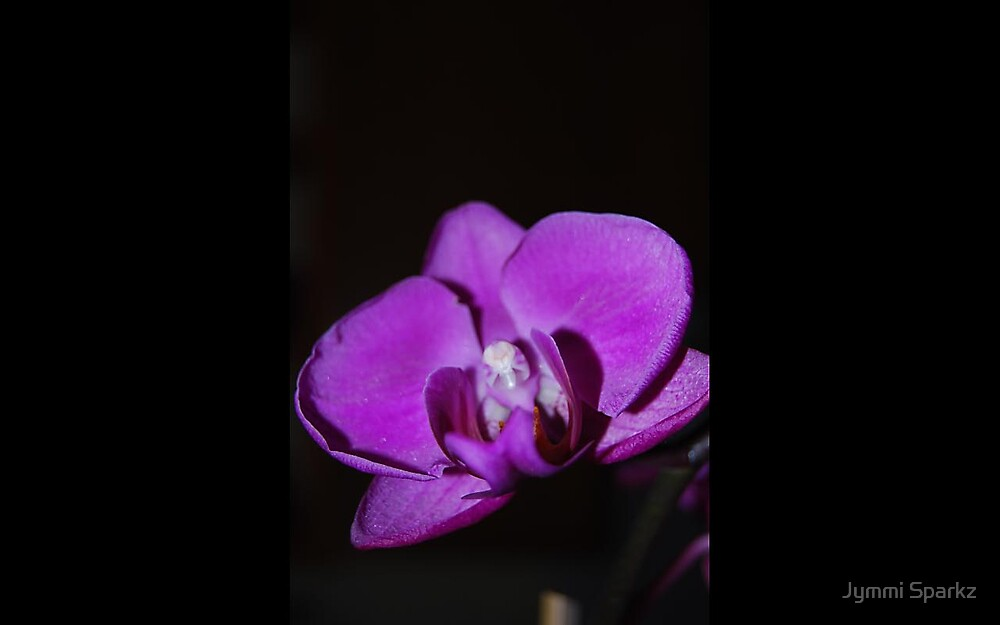 My December Orchid Bloomed! by Jymmi Sparkz