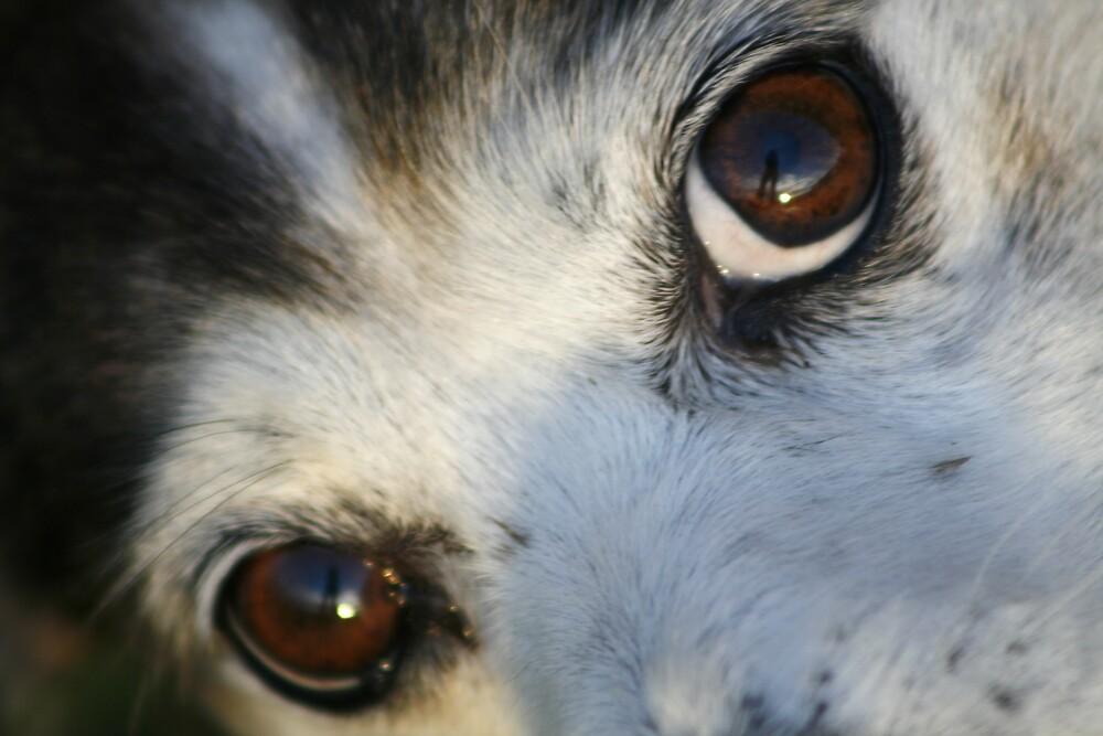 Eyes by Emma Jones