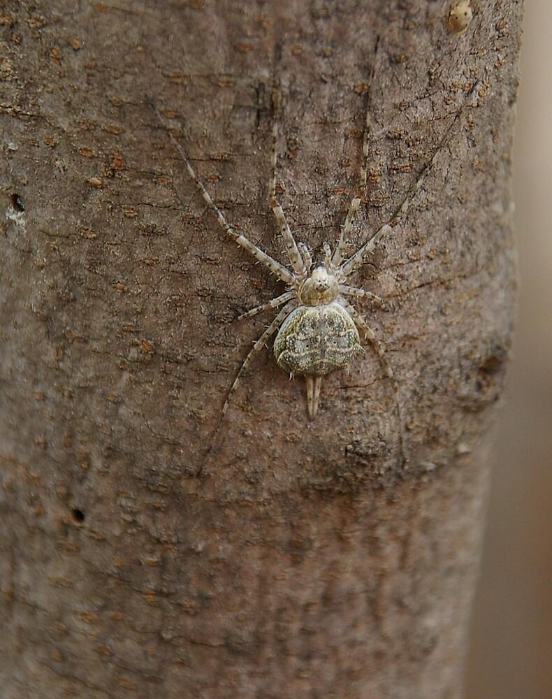 Sak Spider by Deidre Cripwell