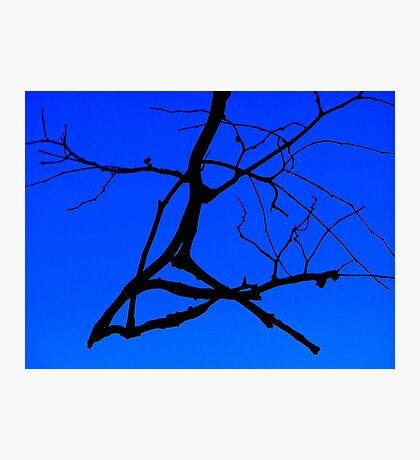 Black and Blu 2 Photographic Print