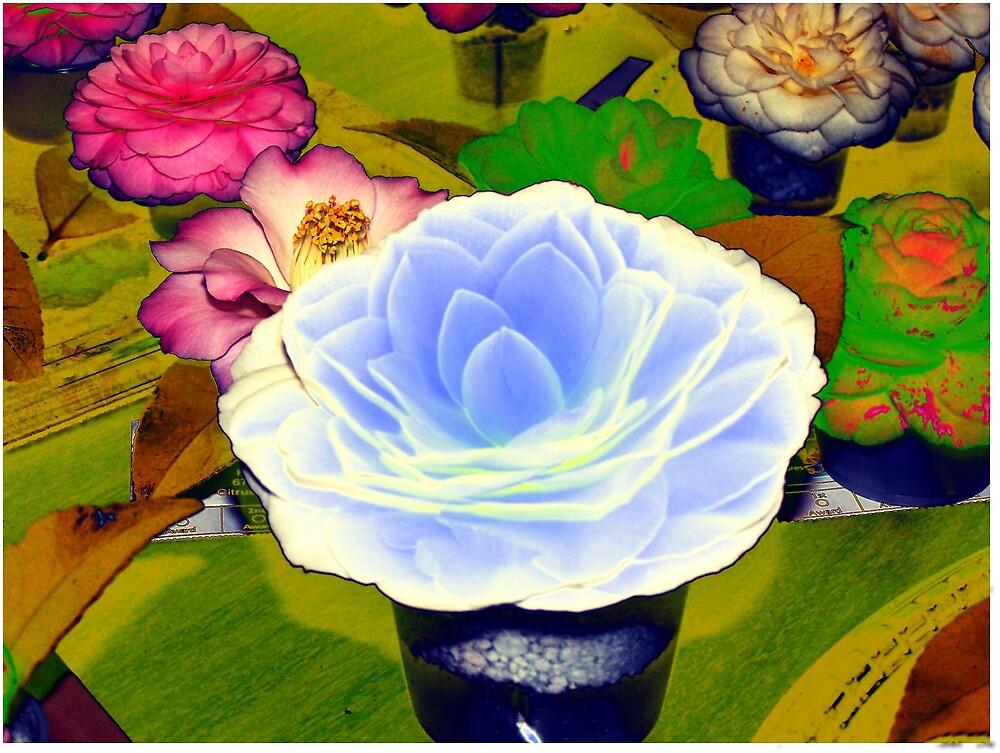 Camellia Art by paulwhiteuvme