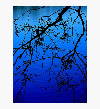 Black and Blu 1 Photographic Print