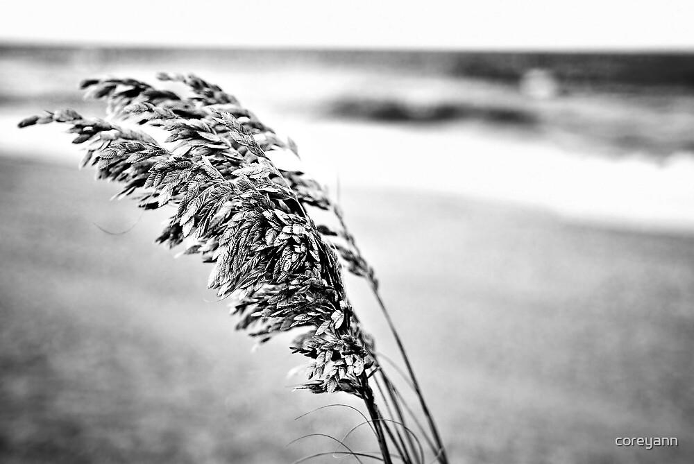 Sea Oats Black and White by coreyann