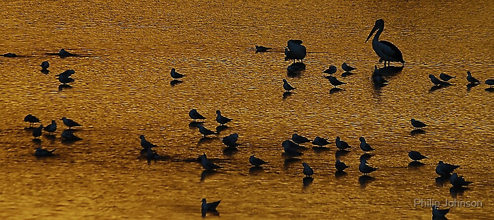 On Golden Pond - Narrabeen Lakes, Sydney Australia by Philip Johnson