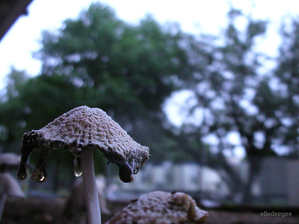 Dripping Mushroom by elledeegee