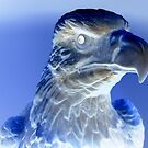 Bald Eagle in Negative by James Cuellar