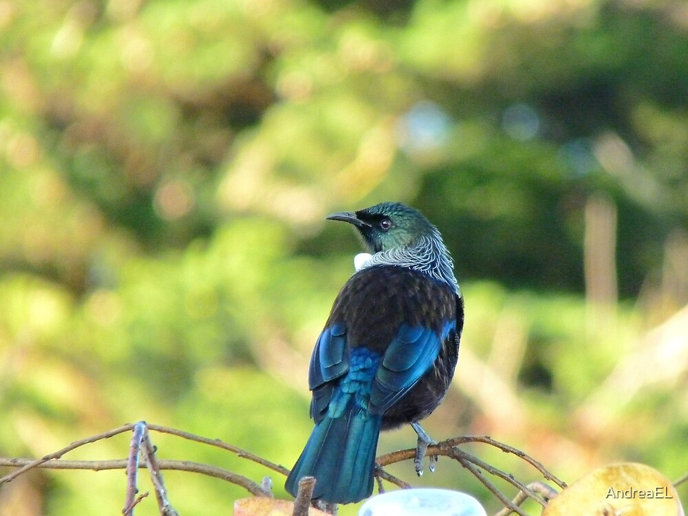 Anyone Need A Parson Around Here? - Tui - NZ by AndreaEL