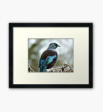 Iv'e A Lace Collar & No Pink Tights!!! - Tui - NZ  Framed Print