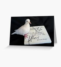 Pursue Your Heart... - White Dove - NZ Greeting Card
