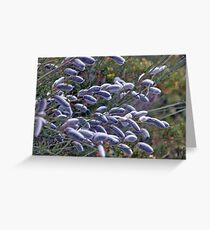 Salix Cinerea Greeting Card