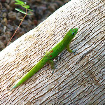 Gecko by bjarboe