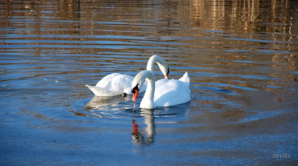 Mr and Mrs Swan by deville
