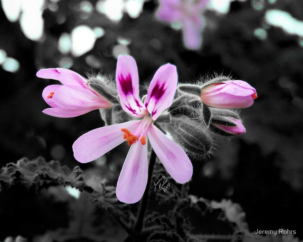 Spring Bloom by Jeremy Rohrs