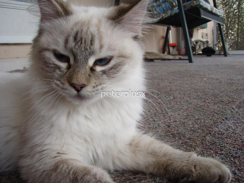 Tough Cat by peterplusx