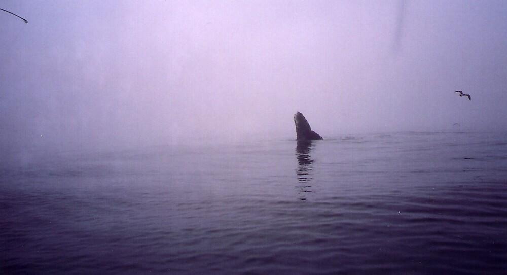Blue whale beside my boat Ucluelet by eddyf246