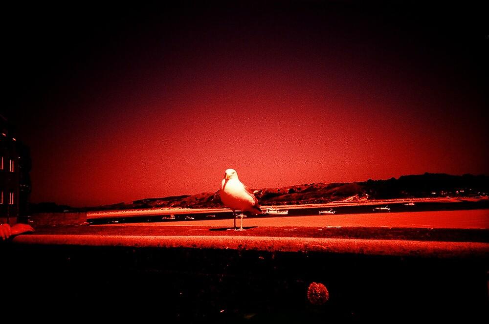 Gull by presty