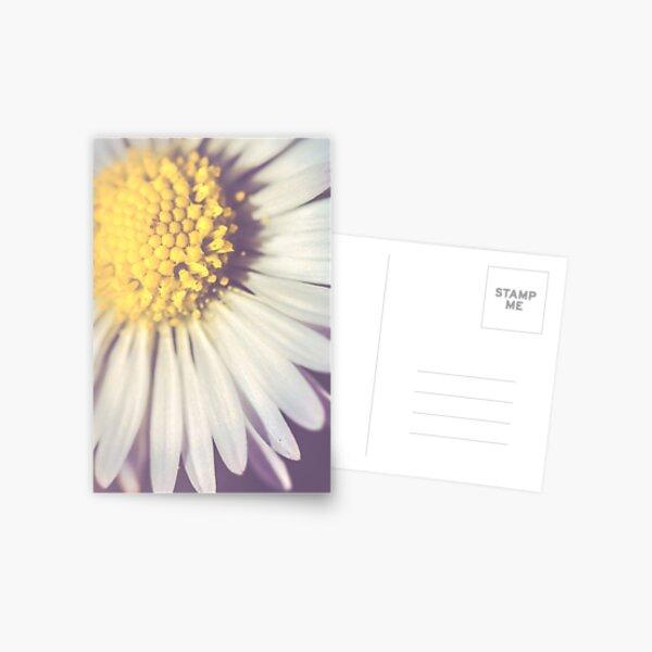Daisy petals Postcard