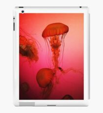 Portrait of a Jellyfish- Pink iPad Case/Skin