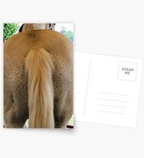 Horse's Ass Postcards