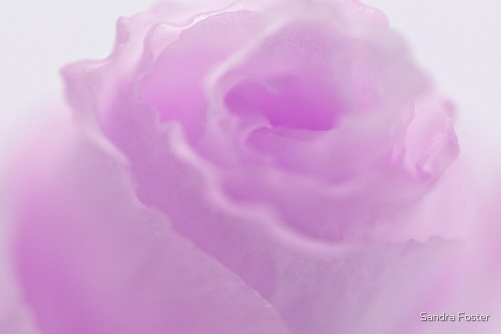 Pink Lisianthus Macro  by Sandra Foster