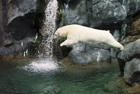 Belly flop, Seneca Zoo Rochester NY by pwall