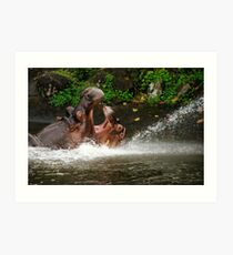 Two hippos fighting with mouth wide open in the water. Art Print