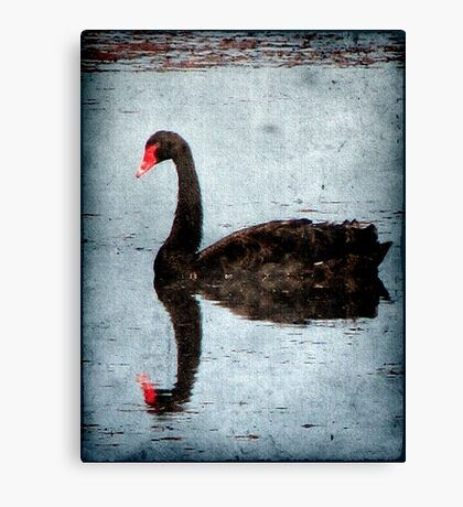 Morning on Dangars Lagoon III Canvas Print